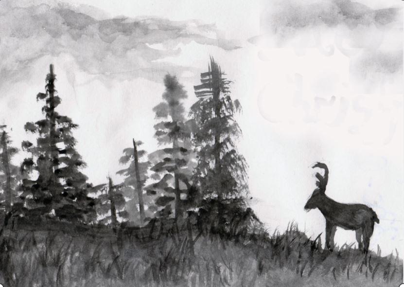 Deer 1112019